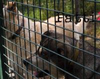 PATTI – Stalli di ricovero per randagi, prosegue la costruzione dei box in contrada Mulinello