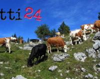 PATTI – Brucellosi, sequestrato allevamento in contrada Masseria