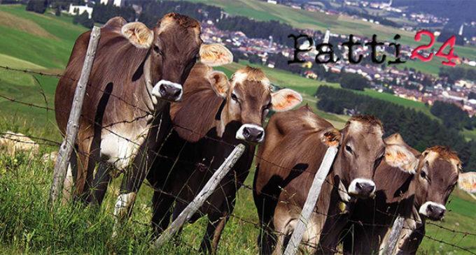 SANT'AGATA MILITELLO – La Polizia sequestra capi di bestiame non sottoposti a verifica sanitaria