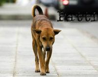 BARCELLONA P.G. – Lotta al randagismo e tutela degli animali