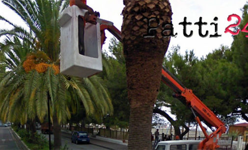 PATTI – Interventi su palme colpite dal punteruolo rosso sul lungomare Zuccarello a Marina e in via Garibaldi nel centro cittadino