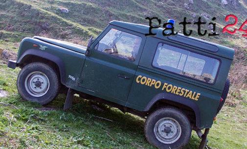 MONTALBANO ELICONA – Eseguito stamani dal corpo forestale – distaccamento di Patti il sequestro di alcuni capi di bestiame