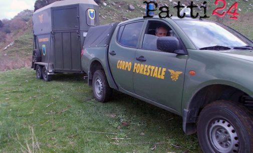 TRIPI – Nuovi controlli interforze contro il pascolo abusivo, sequestrato un gregge di ovini
