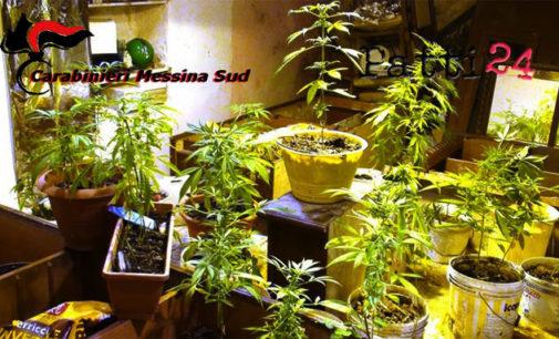 MESSINA – Produzione illecita di sostanze stupefacenti, due arresti