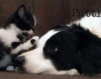 MESSINA – Animali Acts 10 provvedimenti comunali a tutela degli animali