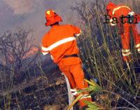 MESSINA – Sono partite questa mattina le procedure per l'avviamento dei lavoratori forestali del servizio antincendio