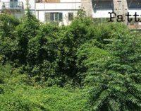 PATTI – Rovi ed erbacce in pieno centro cittadino, habitat naturale di randagi, ratti e  insetti di ogni tipo