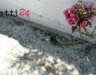 PATTI – Povero topo … poveri i nostri cari, un po' piu' di rispetto no
