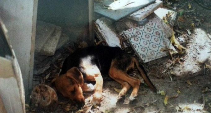 PATTI – Blitz dei Carabinieri al canile lager, sequestrati 91 cani