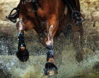 MESSINA – Corse clandestine di cavalli, assessore Ialcqua chiede iniziative al Questore per stroncare il fenomeno