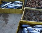 MESSINA – Blitz con circa 30 militari a tutela delle norme di conservazione degli alimenti in vendita, denunce