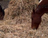 TUSA – Sequestrato maneggio abusivo, privo delle necessarie autorizzazioni sanitarie per la detenzione degli animali