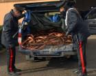 MESSINA – Trasportavano circa 4 tonnellate di cavi in rame di provenienza furtiva, arrestati (Aggiornamento)