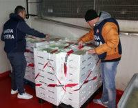 MESSINA – Capitaneria di Porto sequestra 11 mila kg di pesce