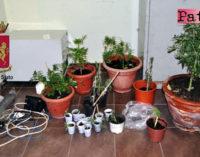 MESSINA – Sorvegliato speciale coltivava marijuana nel suo appartamento, arrestato