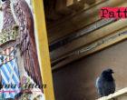 PATTI – La Regione legifera su assunzioni precari comunali. L'opposizione chiede tavolo di concertazione.
