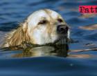 LIPARI – Donna accusa malore e precipita in mare. Salvata da un cane labrador