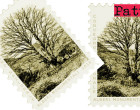 SANTO STEFANO DI CAMASTRA – 18 -19 giugno 2016: Convegno Nazionale Alberi Monumentali Parco dei Nebrodi – Parco delle Madonie