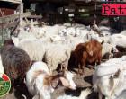 MESSINA – Aziende Zootecniche. Operazione interforze nel territorio di Novara di Sicilia e Tripi