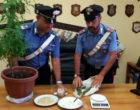 CAPRI LEONE – Detenzione illecita di droga. 50enne arresto in flagranza di reato.