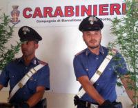"""BARCELLONA P.G. – Coltiva sul terrazzo 2 piante di """"cannabis indica"""". Arrestato 48enne"""