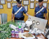 SPADAFORA – Marjuana, due arresti