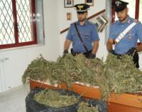 TORTORICI – Arresto di un 55enne per produzione e traffico di droga