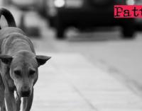 PATTI – Randagismo. Servizi di accalappiamento e trasporto di randagi presso ambulatori veterinari