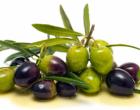 MIRTO – 2° Festival dell'olio di oliva dei nebrodi, potatura, assaggi e convegno sul bio