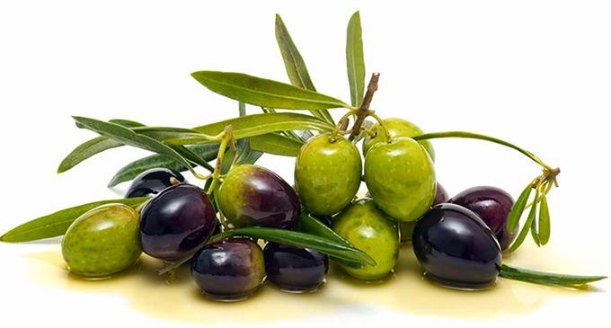 SAN PIERO PATTI – Ingenti danni agli oliveti sampietrini. Il sindaco richiede lo stato di calamità naturale