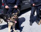 MESSINA – Controlli a tappeto dei Carabinieri: arresti e denunce nella zona Sud