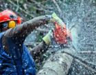 PATTI – Disposto intervento urgente per abbattimento albero di circa 25 metri in una zona via Giuseppe Ceraolo