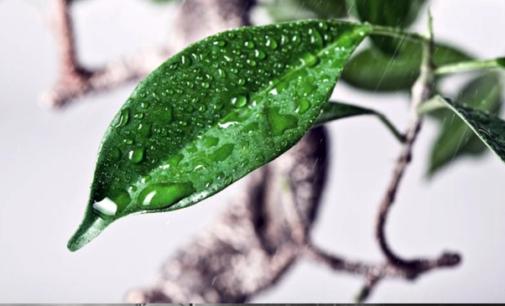 CAPO D'ORLANDO – La UIA organizza un corso per l'utilizzo dei prodotti fitosanitari