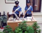 MESSINA – 3 kg di marijuana, occultati in sacchetti sottovuoto celati in diversi nascondigli dell'abitazione. Un arresto