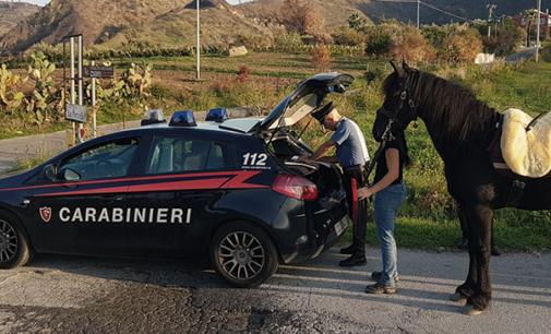 PATTI – In zona C.da Belfiore controllati due calessi trainati da altrettanti cavalli. Verosimilmente avevano appena concluso una competizione illegale su strada