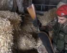 MOTTA D'AFFERMO – Arrestato 38enne agricoltore per detenzione illegale di arma clandestina e ricettazione