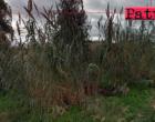 PATTI – Terreni incolti in centro città infestati da canneti, erbacce, rovi e rifiuti. Disposta ordinanza di pulizia e di discerbamento