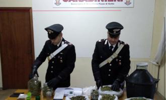 BARCELLONA P.G. –  Arrestati in flagranza due fratelli per detenzione ai fini di spaccio di sostanze stupefacenti. Sequestrati 2 kg di marijuana