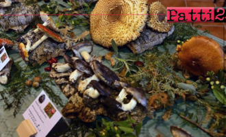 BARCELLONA P.G.- 2ª edizione della mostra micologica. Esposte ben 120 specie fungine del territorio siciliano, alcune molto rare