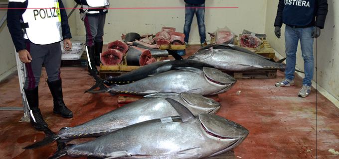 VILLAFRANCA TIRRENA – Sequestrati 800 Kg di tonno rosso destinati a esercizi commerciali della Provincia messinese. Intervento congiunto Polstrada di Barcellona P.G. e Guardia Costiera di Milazzo