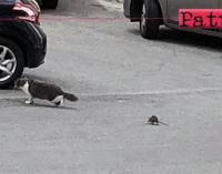 """PATTI – Abbandono e degrado. Di fronte a un topo di fogna anche il gatto ha """"fatto spallucce"""" e si è """"ritirato in buon ordine"""""""