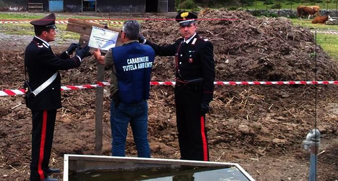 SAPONARA – Scarico di effluenti di allevamento bovino non autorizzato. Denunciato 50enne titolare di una azienda zootecnica