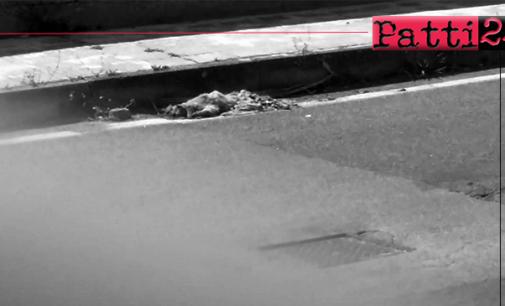 """PATTI – Dopo 5 giorni, gatto travolto sulla via  Padre Pio è ancora """"adagiato"""" in prossimità del marciapiede"""