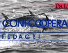 """FEDAGRIPESCA SICILIA – Cattura del tonno rosso. Nino Accetta: """" … in futuro Ministero e Ue smettano di programmare con metodi da apprendisti stregoni"""""""