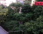 PATTI – Una foresta in pieno centro cittadino. Habitat naturale di insetti di ogni tipo e di ratti