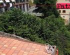 PATTI – Degrado urbano con vegetazione spontanea che domina la scena