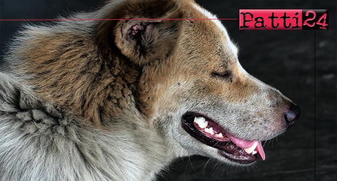 BARCELLONA P.G. – Lotta al randagismo. Controlli a tappeto sul territorio e cattura di cani pericolosi