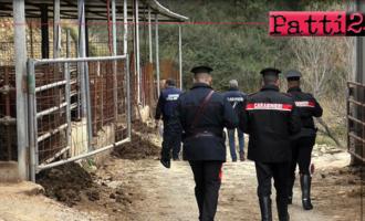 MISTRETTA – 3 deferiti in stato di libertà per reati in materia ambientale. 12.000,00 euro circa di sanzioni per illeciti amministrativi