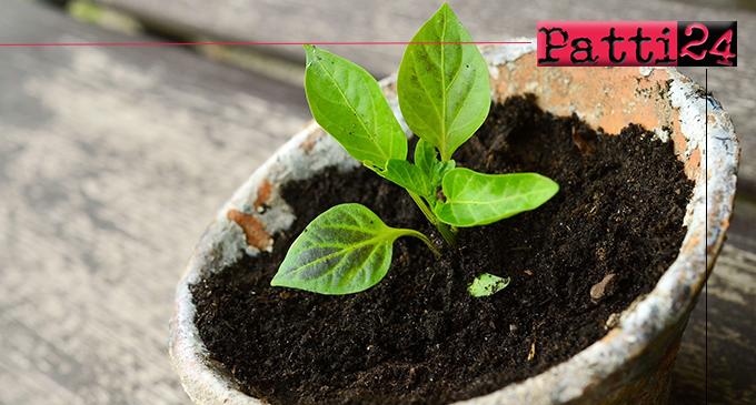 SINAGRA – Imparare i segreti dei fiori con un corso di Giardinaggio per tutti gli appassionati di piante e fiori