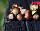 SAN PIERO PATTI – Convegno su strategie per la rivalorizzazione della coltura del nocciolo in Sicilia